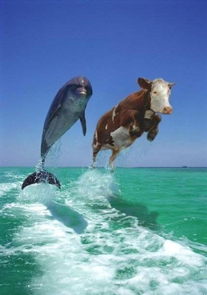 www.dolphinandcow.com