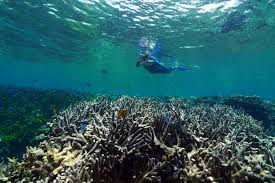 http://theconversation.com/calls-for-climate-action-as-great-barrier-reef-suffers-major-coral-loss-9922
