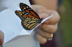 http://www.wishuponabutterfly.com/weddings/butterfly-packages/