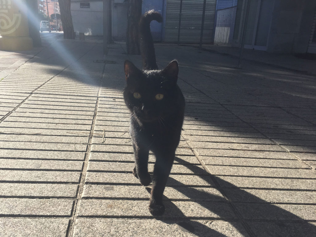 blanes-black-cat