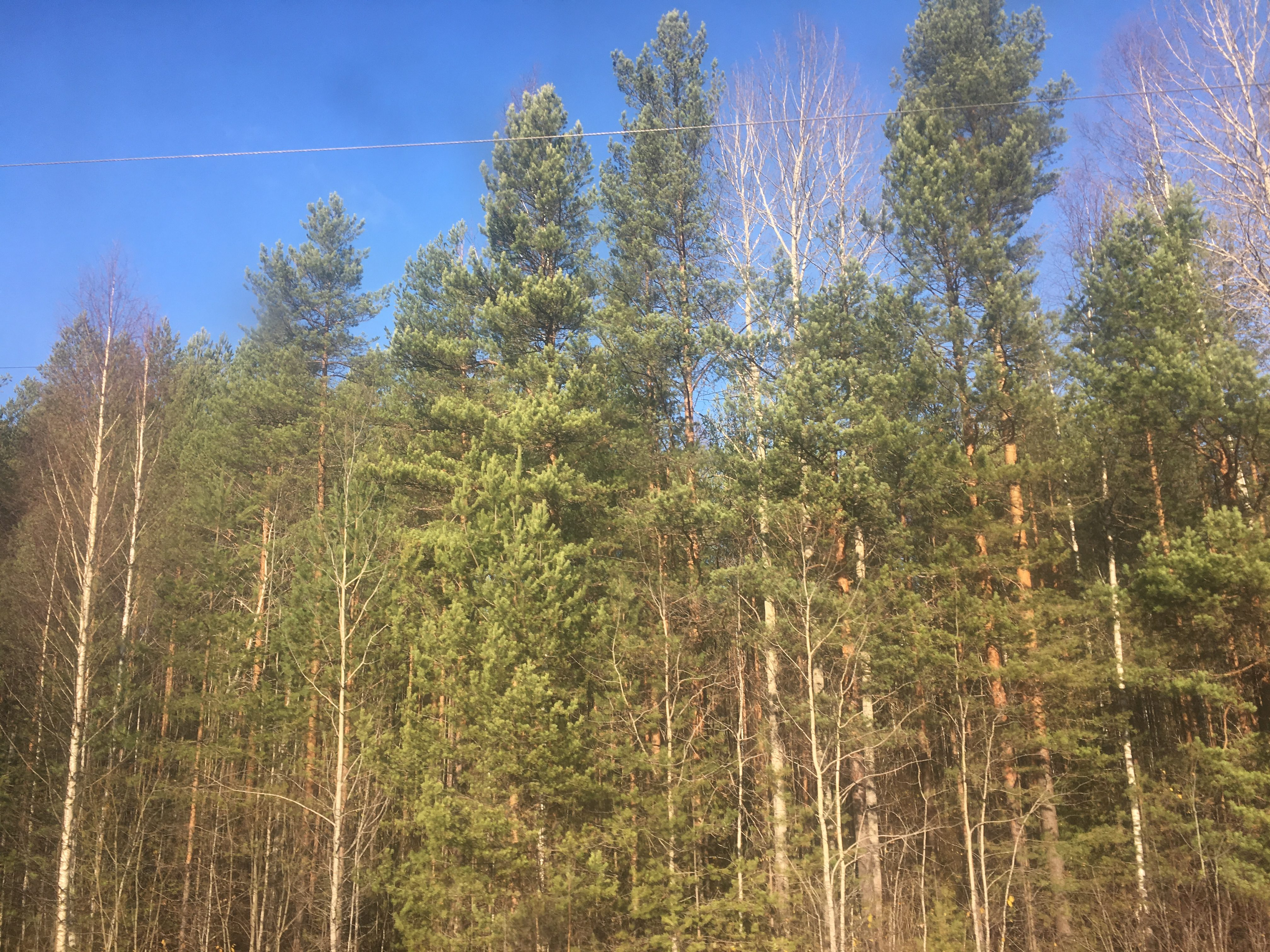 Forest Kotel'nichskiy rayon