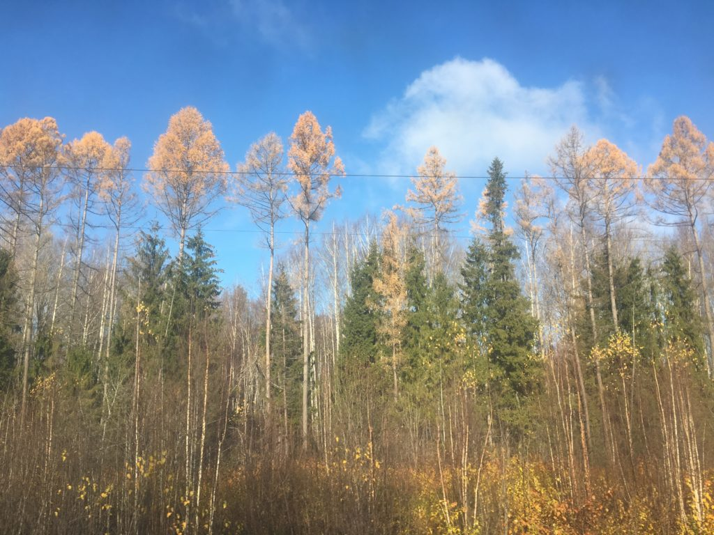 Leaves still clinging on the way to Siberia