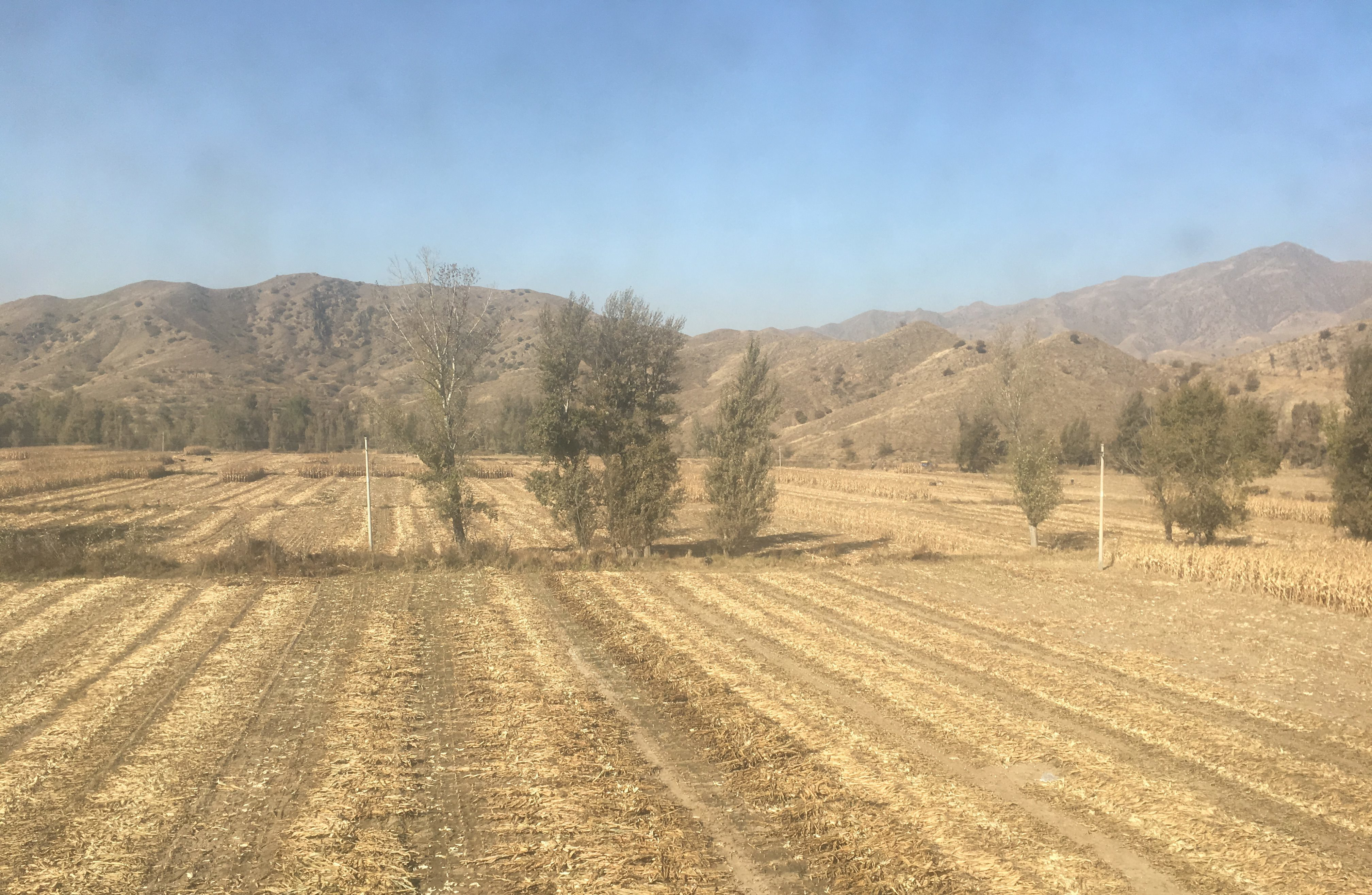 Harvest in as the Chinese terrain starts to soften