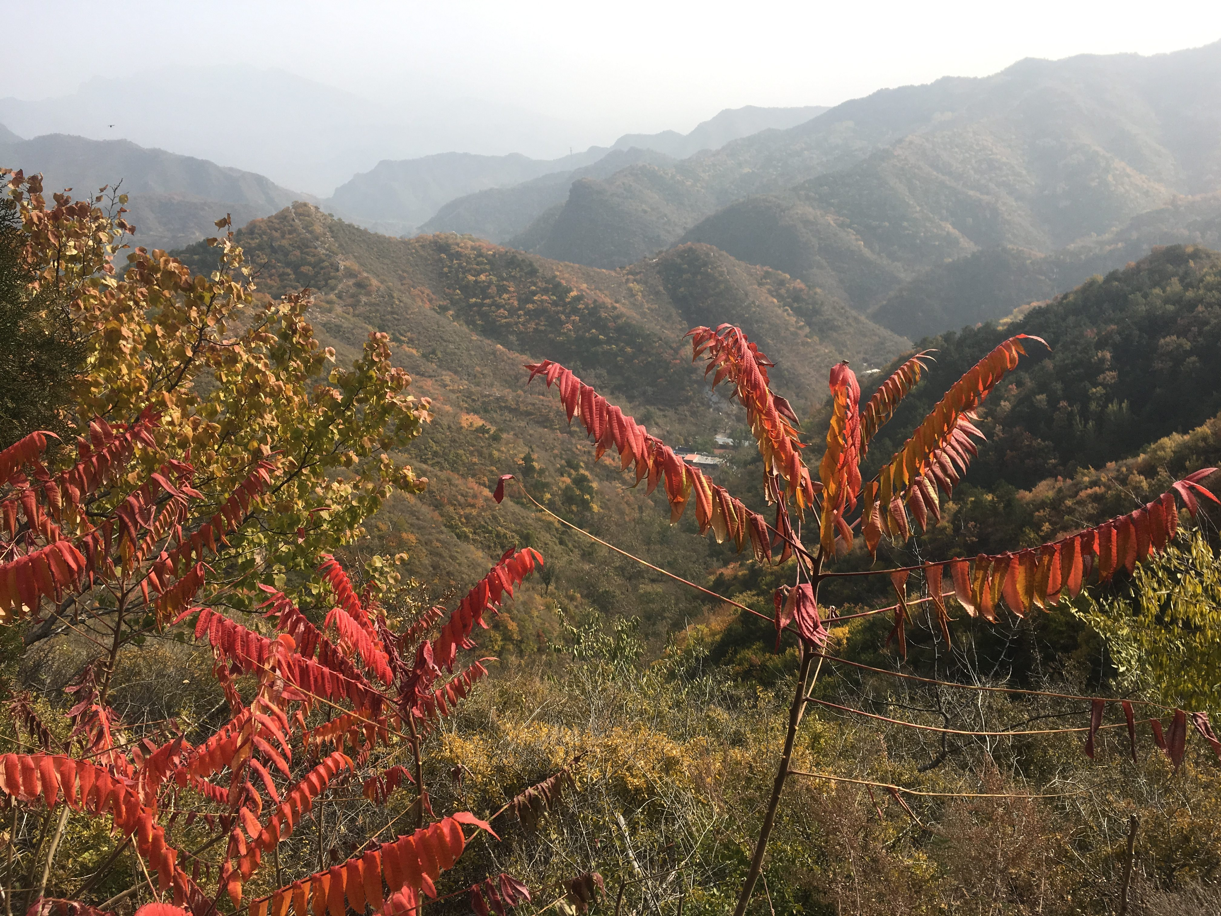 Autumn colour on the Great Wall