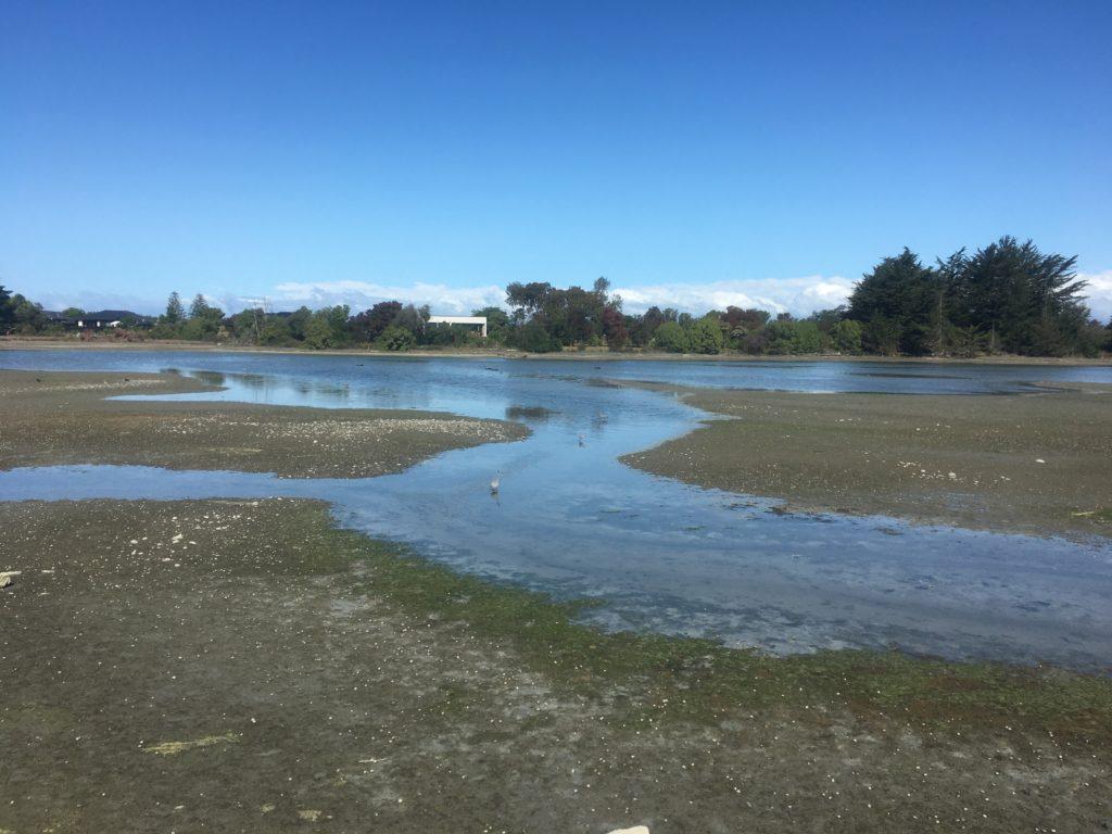 Motueka wetlands
