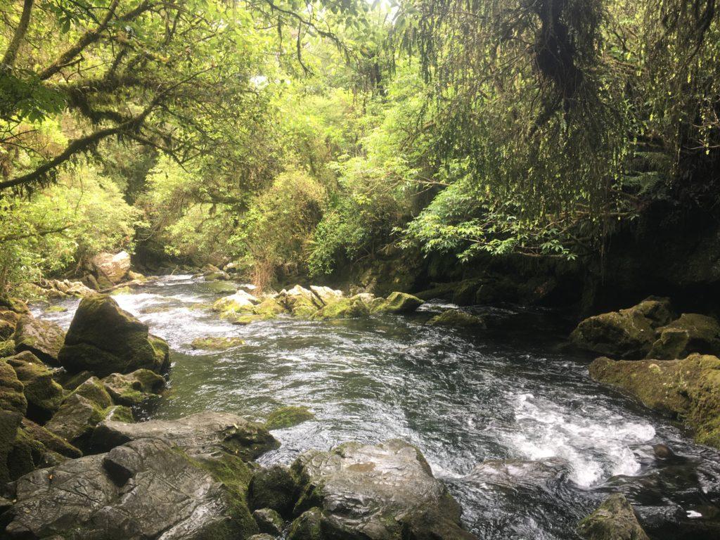 Ruiwaka Resurgence near Motueka