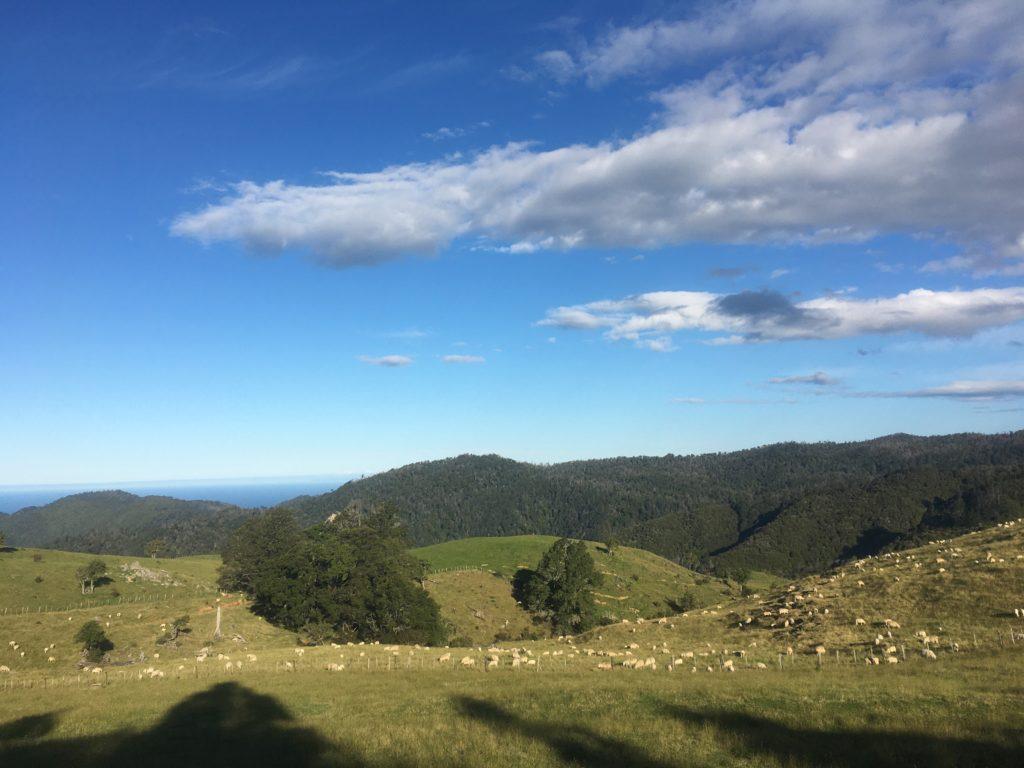 sheep near Anahata retreat
